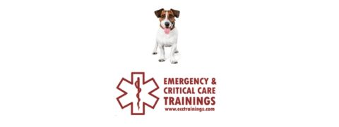pet first aid ecctrainings